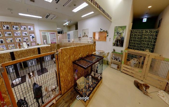 Googleストリートビュー ペットンカフェ